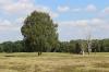 Lüneburger Heide_2